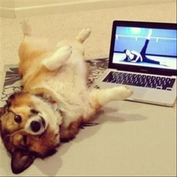 funny dogs (40)