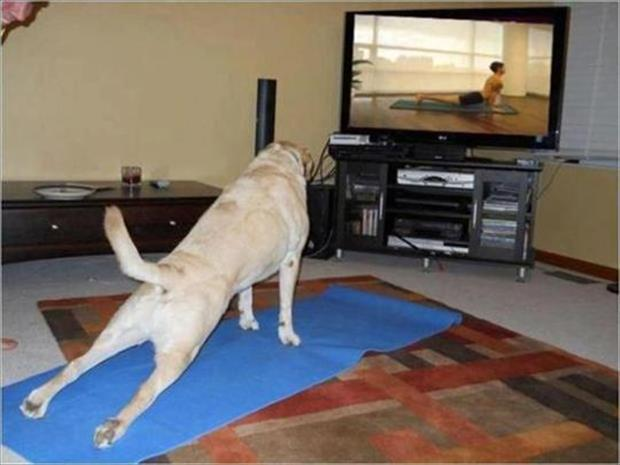 funny dogs (41)