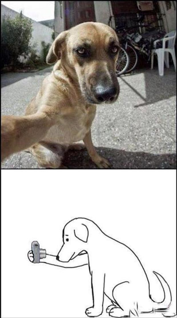 funny dogs (43)