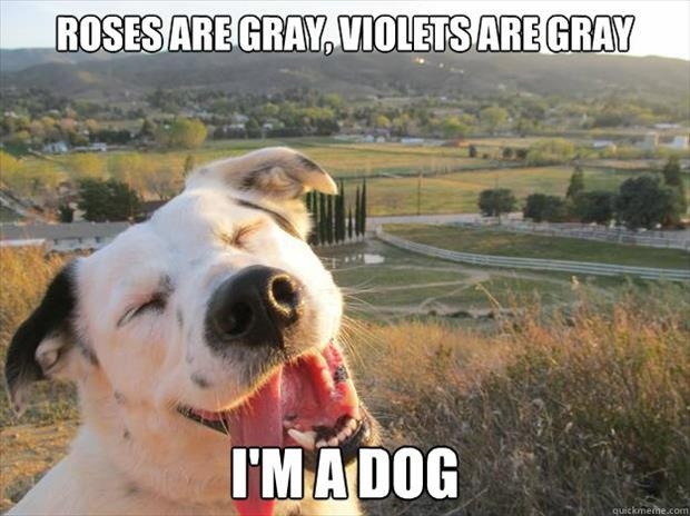 funny dogs (45)