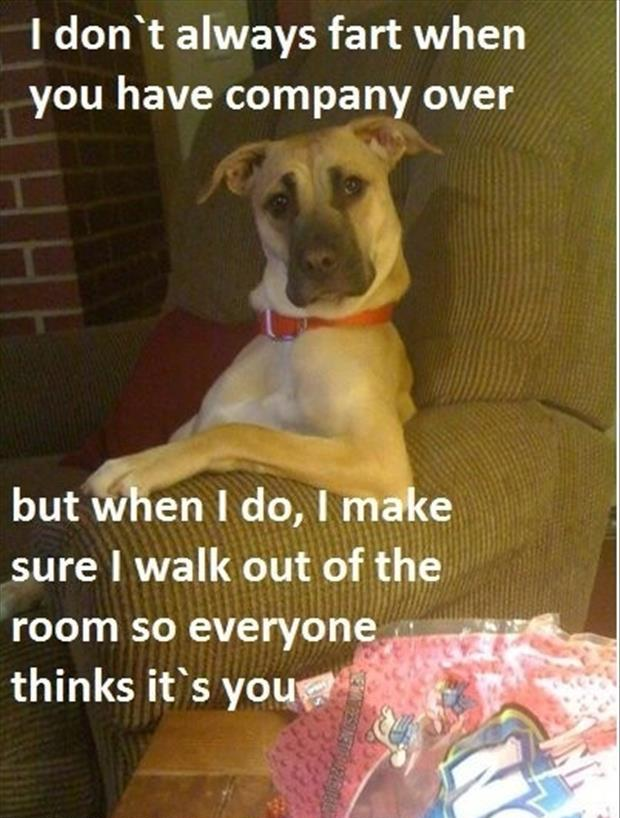 funny dogs (49)
