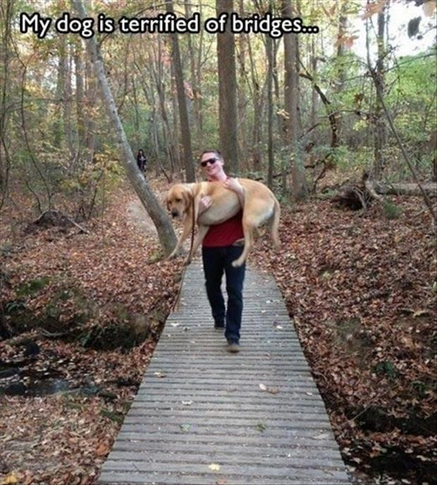 funny dogs (58)