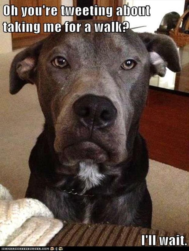 funny dogs (59)