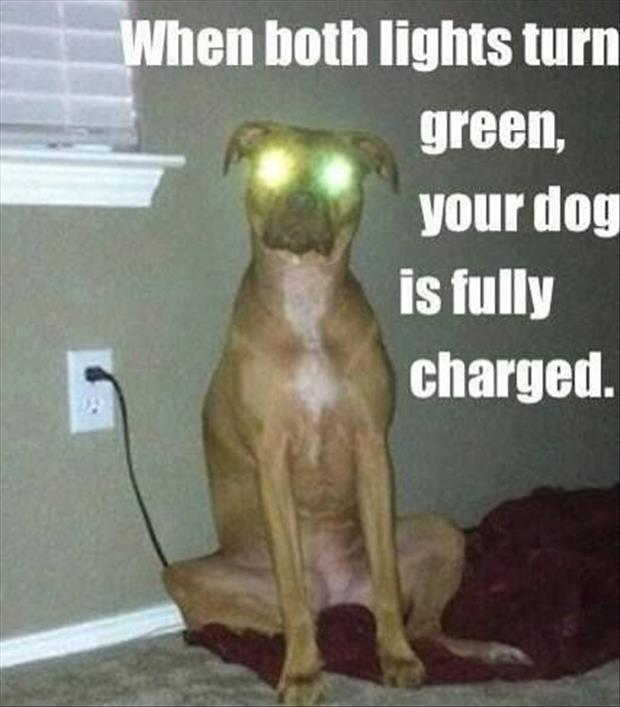 funny dogs eyes light up