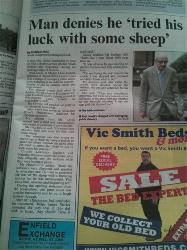 man tried his luck with some sheep