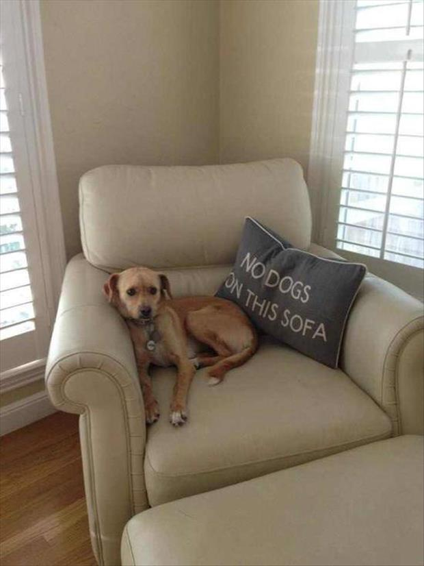 no dogs on the couch