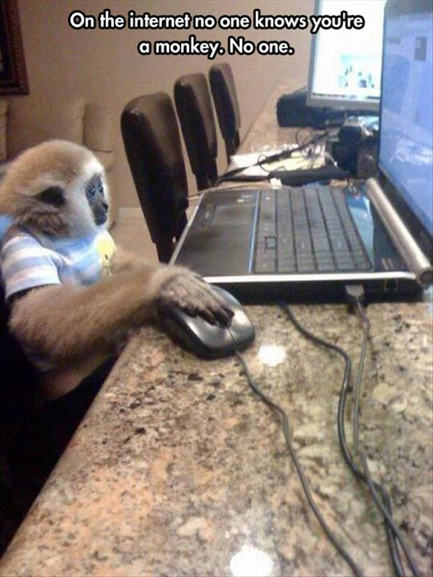 no one knows your a monkey on the internet
