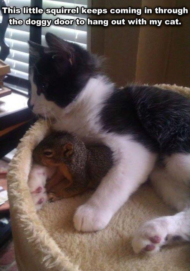 squirrel likes my cat
