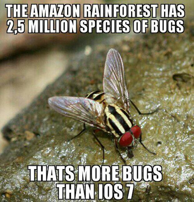the amazon rain forest has bugs