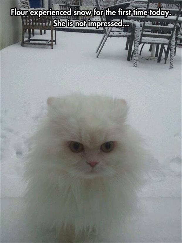 the cat does not like snow