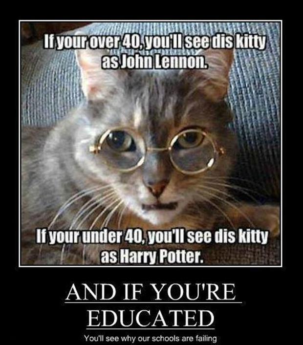 the cat is harry potter