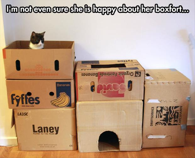 the cat loves the box fort