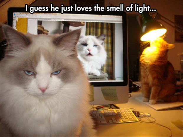 the cat loves the smell of a light bulb