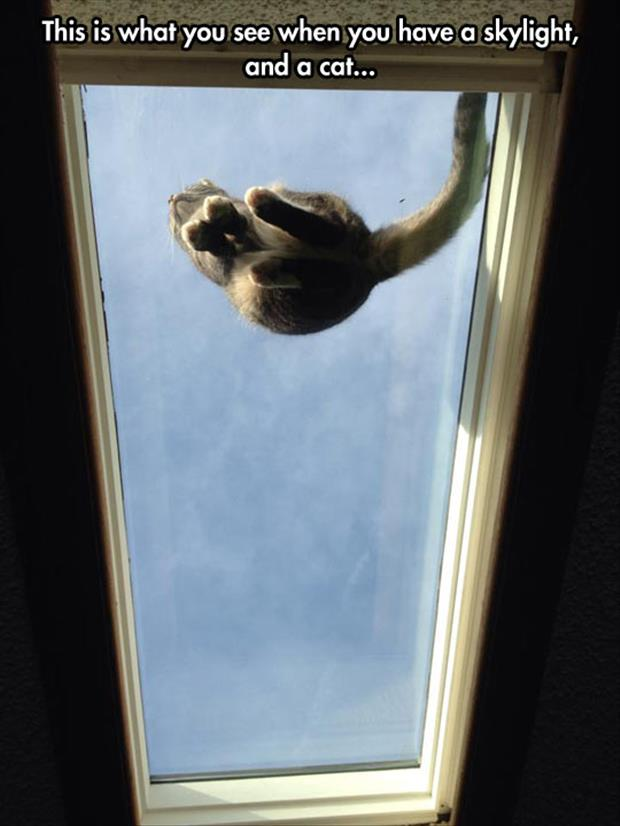 the cat sitting on the window