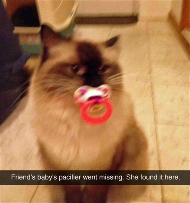 the cat stole the baby pacifier