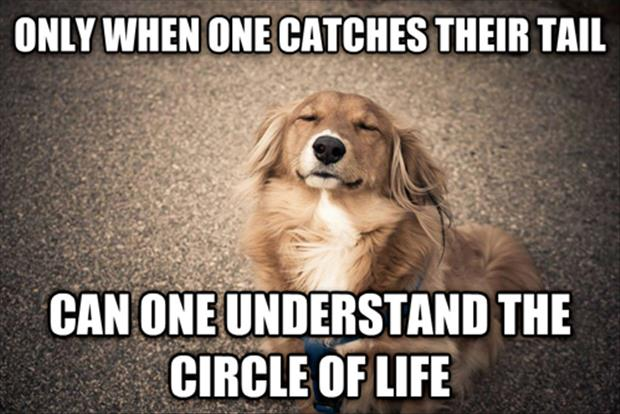 Funny Meme Quotes About Life : The circle of life dump a day