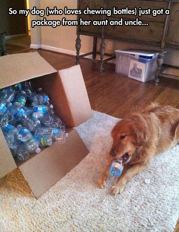 the dog loves chewing plastic bottles