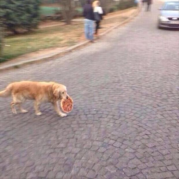 the dog stole the pizza