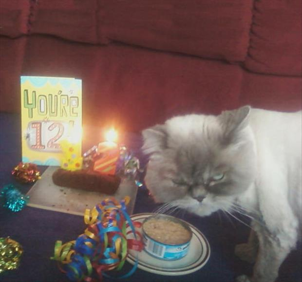 the funny cat birthday