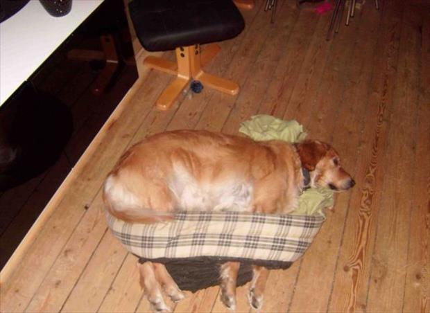 the funny dog bed