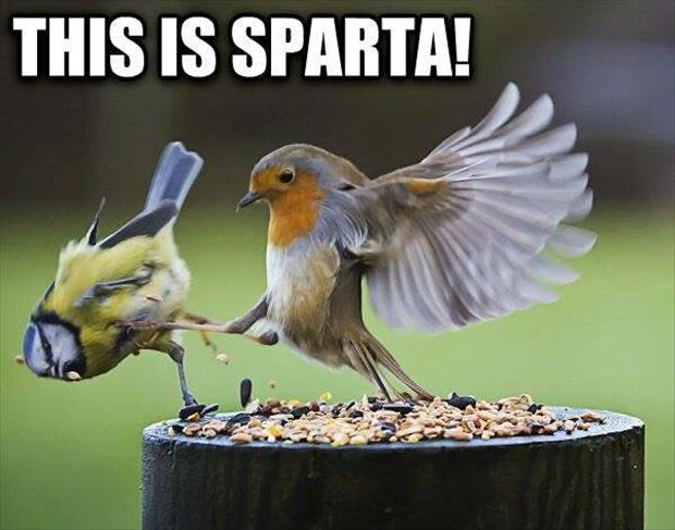 http://www.dumpaday.com/wp-content/uploads/2014/02/this-is-sparta.jpg