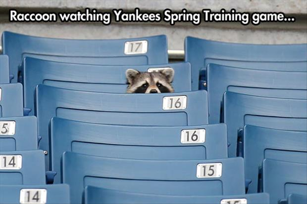 yankees spring training