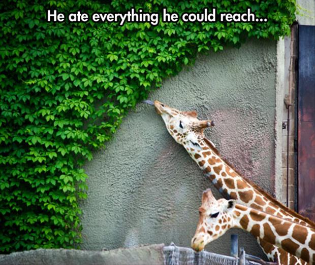 Funny Zoo Meme : Zoo animals eating what they can eat dump a day