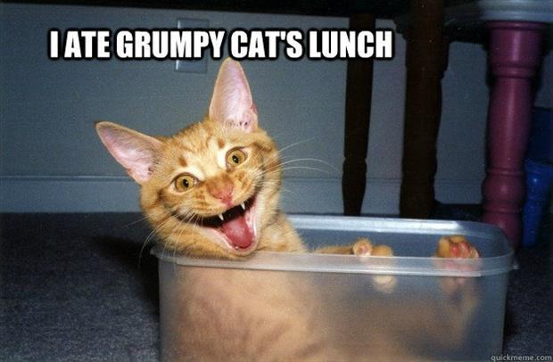 I ate grumpy cat's lunch