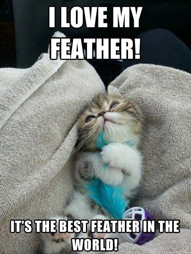 I love feathers
