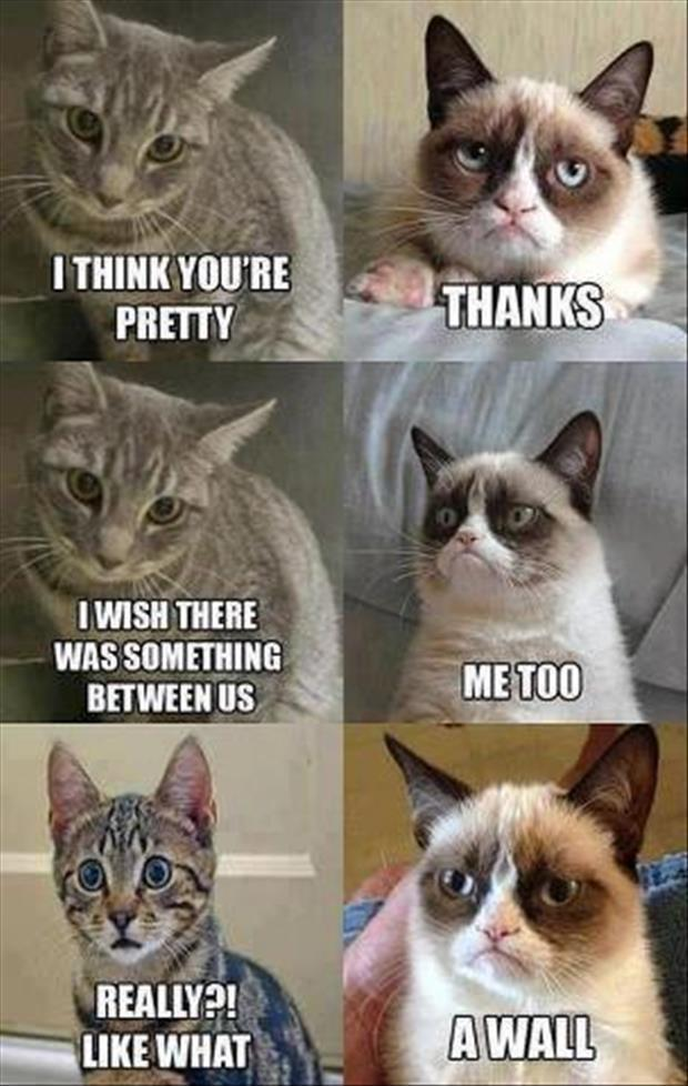 I love you grumpy cat