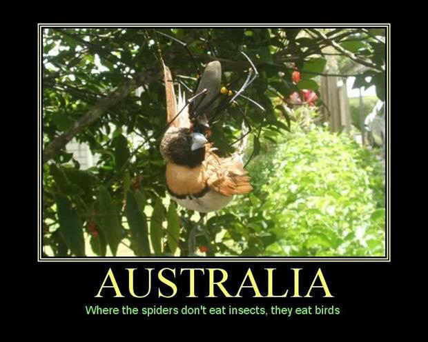 a scary things in Australia (28)