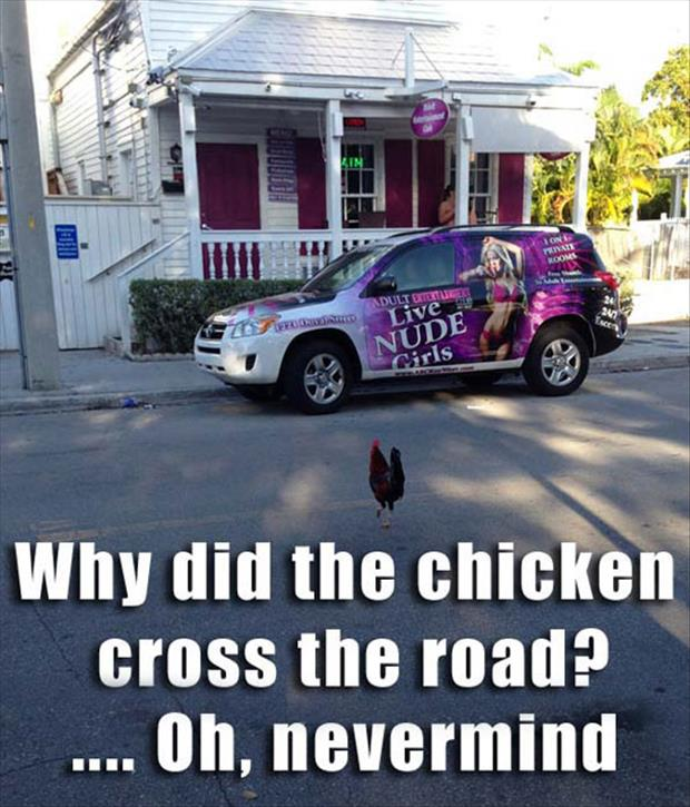 age old question finally answered why did the chicken cross the road