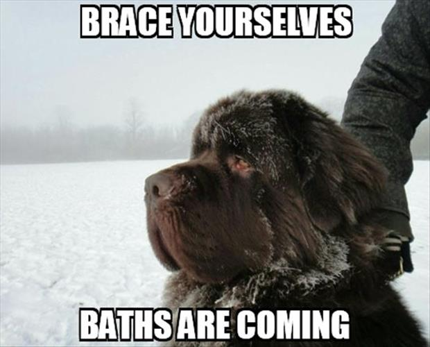 brace yourselves