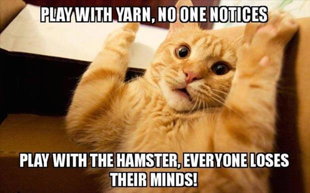 cat plays with yarn