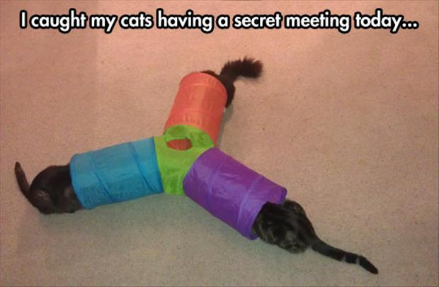cats having a secret meeting