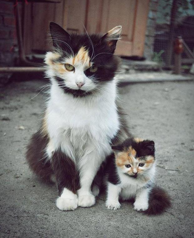 cute animals that have a mini me (6)