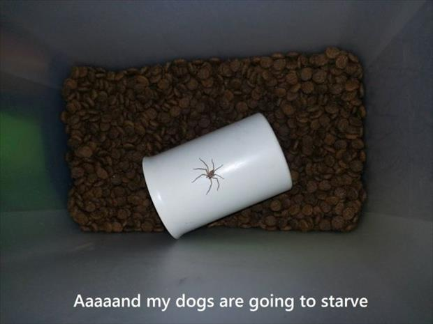 dogs are going to starve