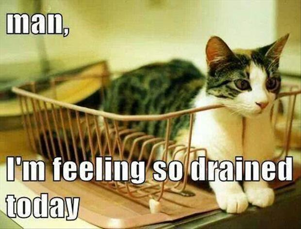 feeling drained today funny cats