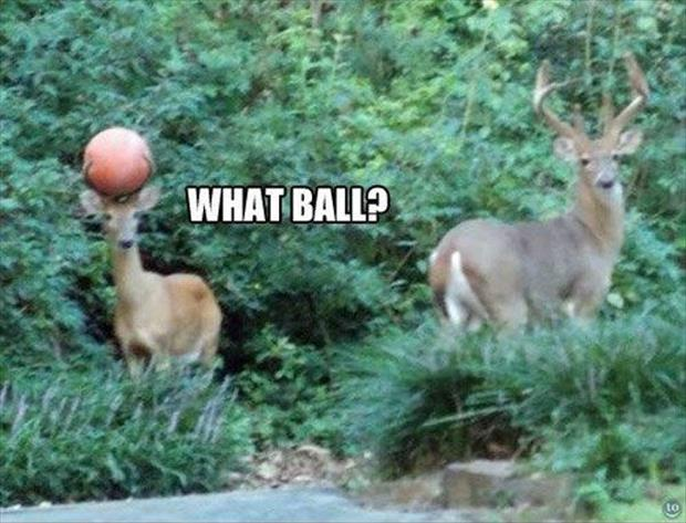 funny deer has a basketball