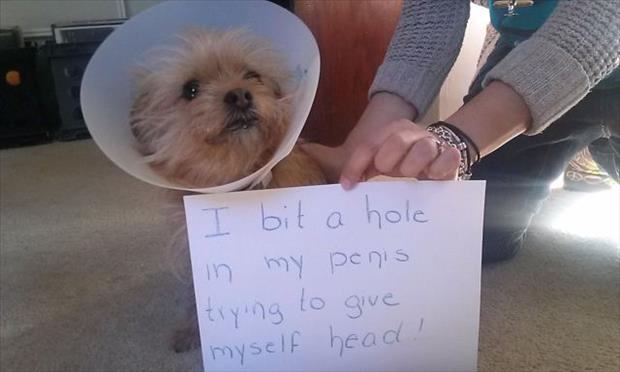 funny dog in cone of shame