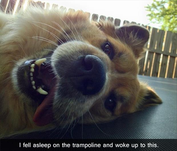 funny dog pictures (18)