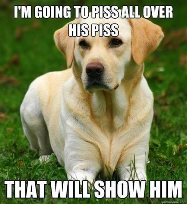 funny dog pictures (21)
