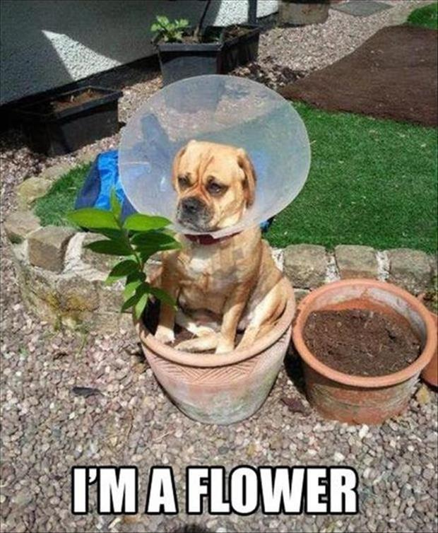 funny dog pictures (3)