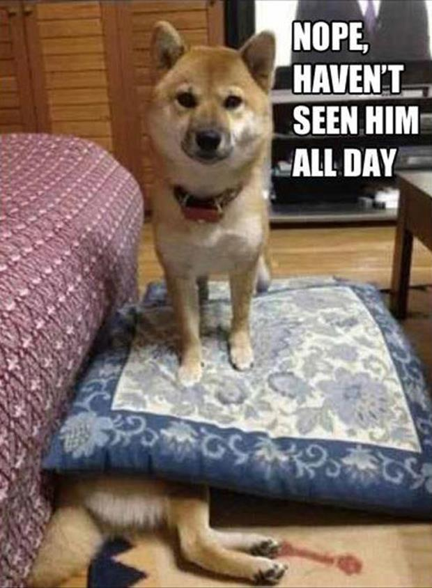 funny dog pictures (35)