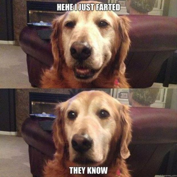 funny dog pictures (6)