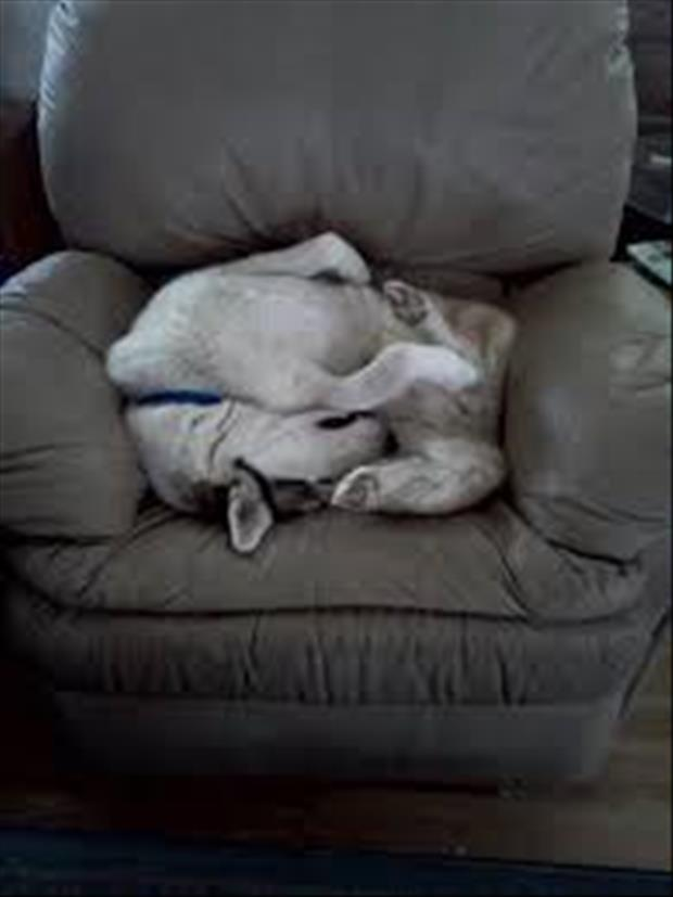 funny dogs sleeping anywhere (13)