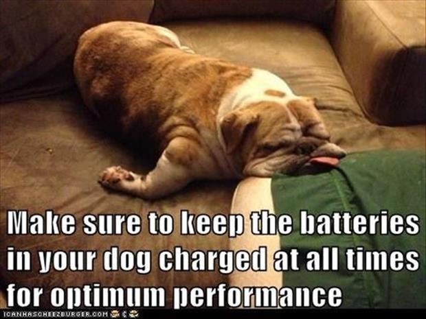funny dogs sleeping anywhere (19)