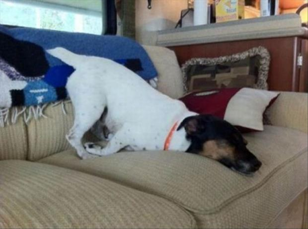 funny dogs sleeping anywhere (22)