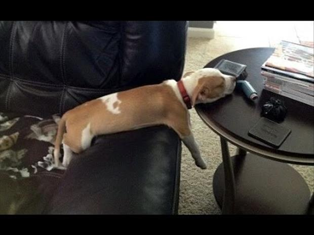 funny dogs sleeping anywhere (25)