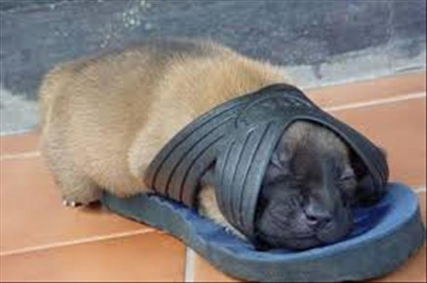 funny dogs sleeping anywhere (27)